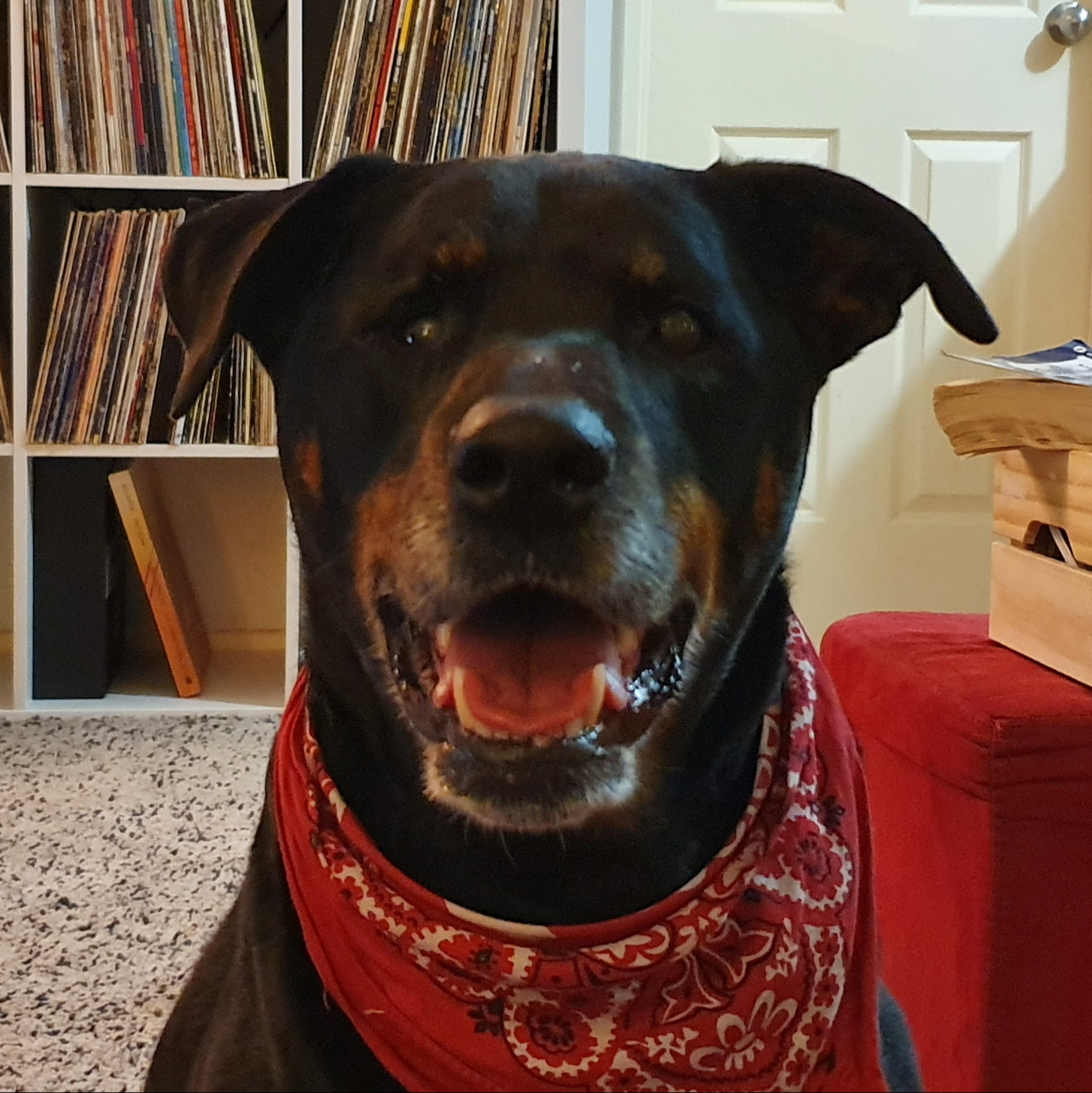JETT: The Best Of Dogs.